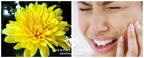 Cách chữa viêm tủy răng tại nhà bằng nước hoa cúc 1